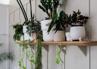 Halo Room plants
